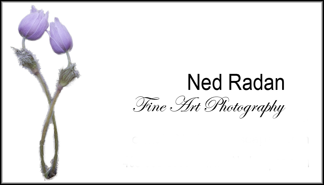 Nedscapes